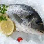 Fisch und Meerestiere - Ein guter Fang beim Muskelaufbau