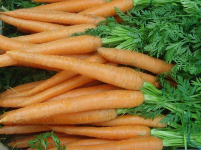 Möhren (Karotte), frisch, roh